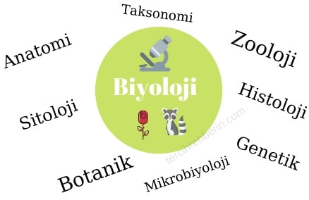 Biyolojinin alt dalları